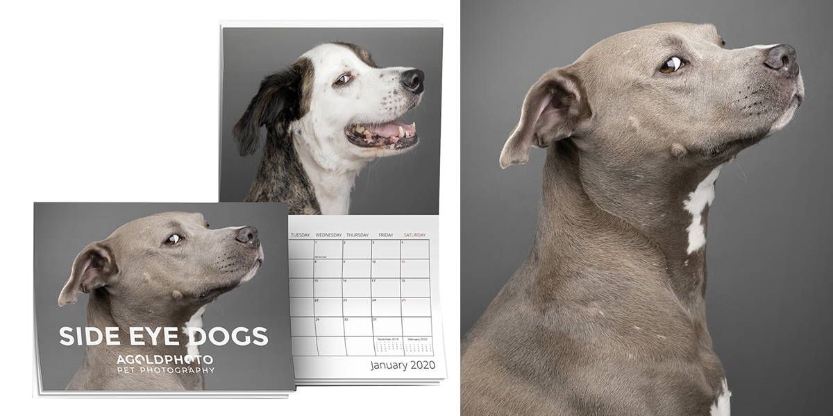 Side Eye Dogs 2020 Wall Calendar – Only $23.99 (Shipping Included)