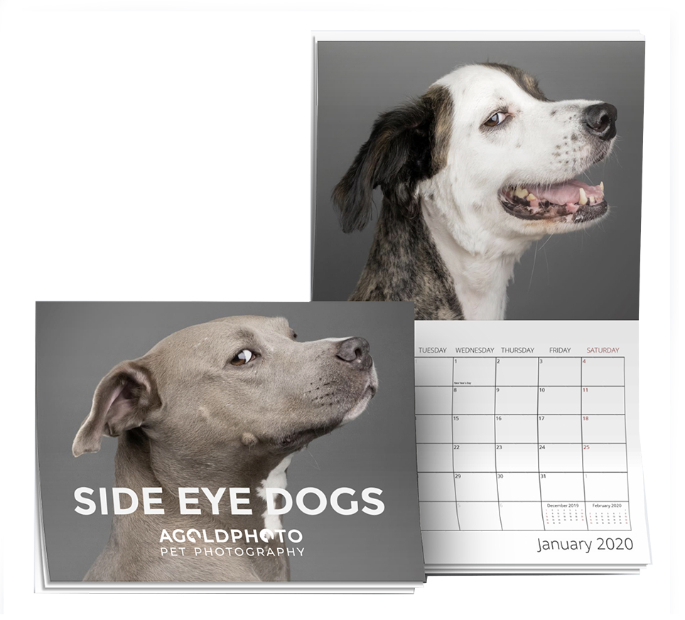 Side Eye Dogs 2020 Wall Calendar | Only $23.99 (Shipping Included)