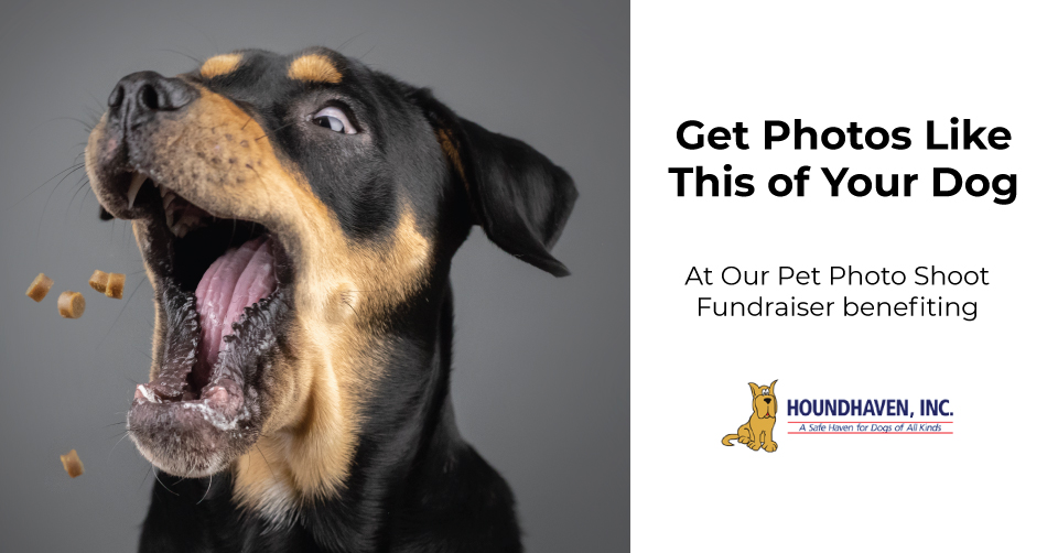 Pet Photo Shoot Fundraiser (Winter Park, FL)