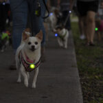 Light Up Your Night Time Dog Walks with Nite Ize