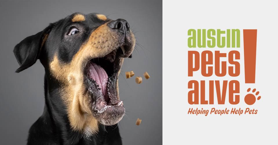 Pet Photo Shoot Fundraiser for Austin Pets Alive!