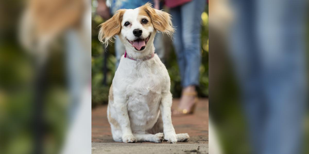 Juju Bea's South Tampa Pets and People Photo Shoot