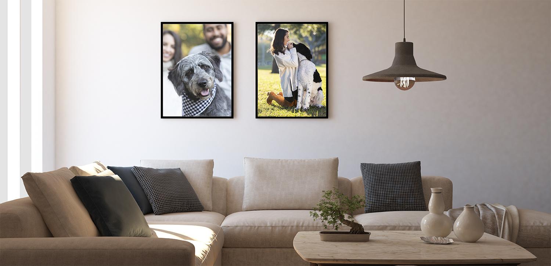 Private Pet Photo Shoots