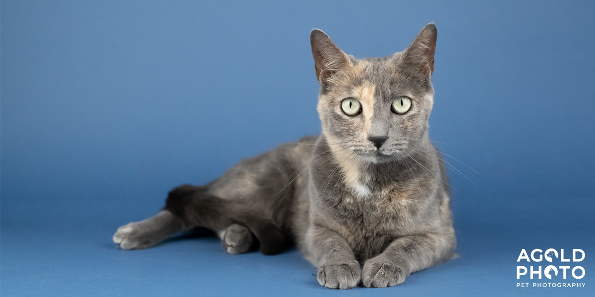 9 Adoptable Cats Worth Purring Over