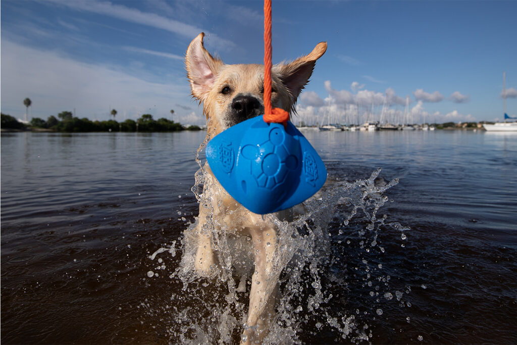 Web_Commercial Pet Photography_Golden and Dog Water Tug Toy 2