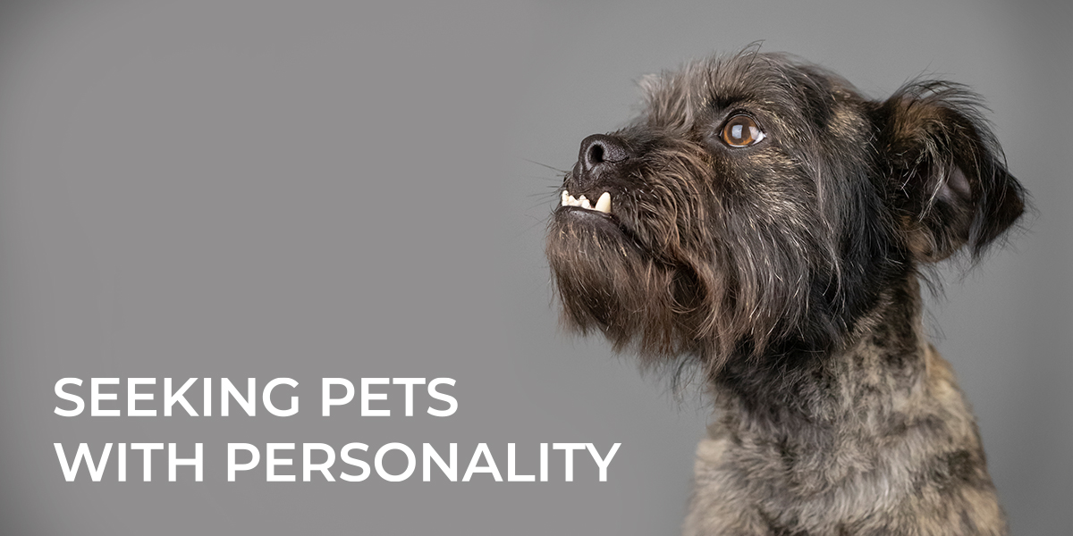 WANTED: Pets with a Unique Personality