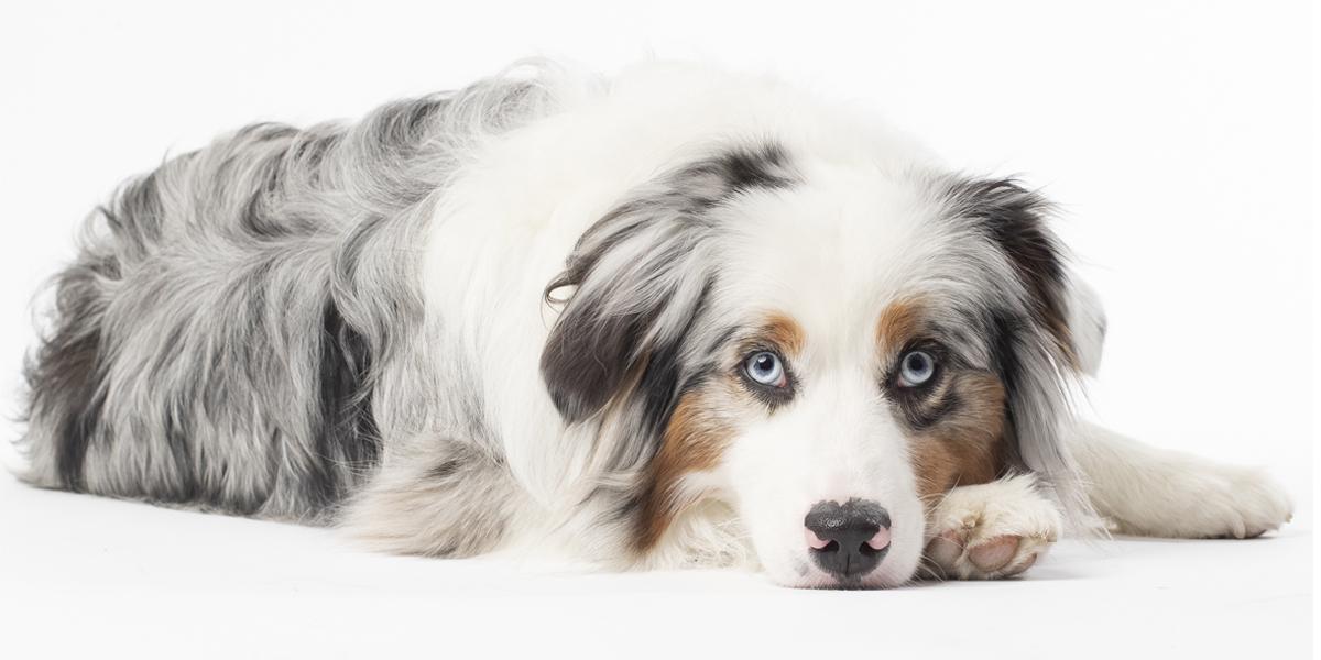 Pet Photography Experiences
